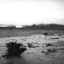 Site photograph.
