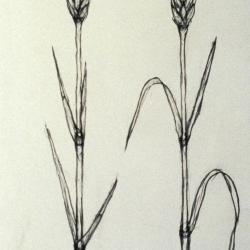 Wheat stalk.
